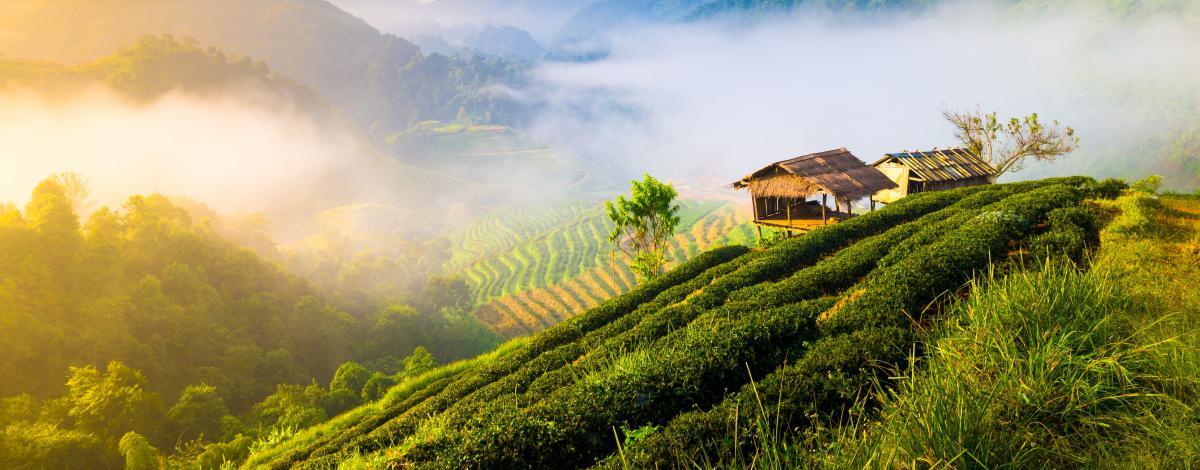 Randonnées et rencontre avec les minorités ethniques de Thaïlande