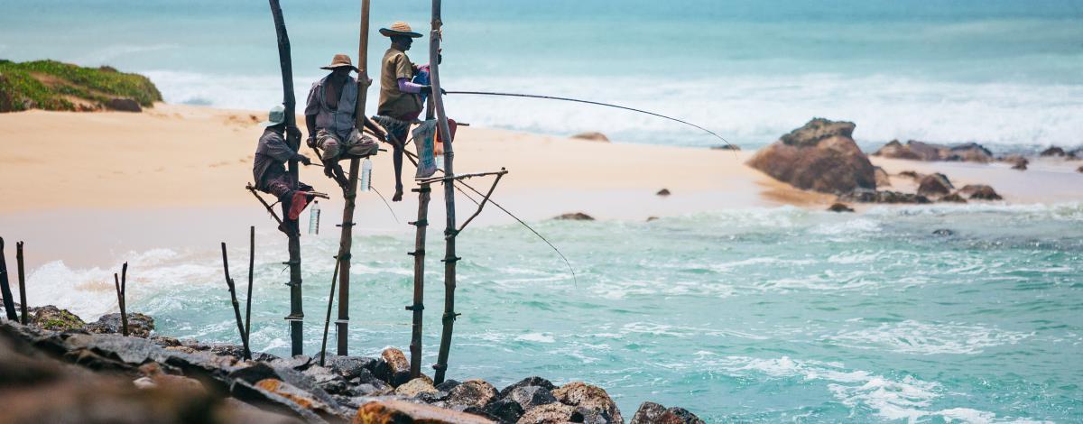 Les incontournables et farniente au Sri Lanka : immersion au coeur du Triangle Culturel et plage paradisiaque