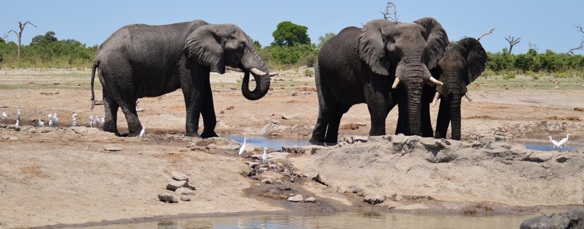 Circuit privé en Afrique du Sud – Le Cap et le Parc Kruger en hébergements haut de gamme