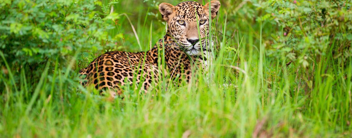 Séjour nature et aventure au Sri Lanka