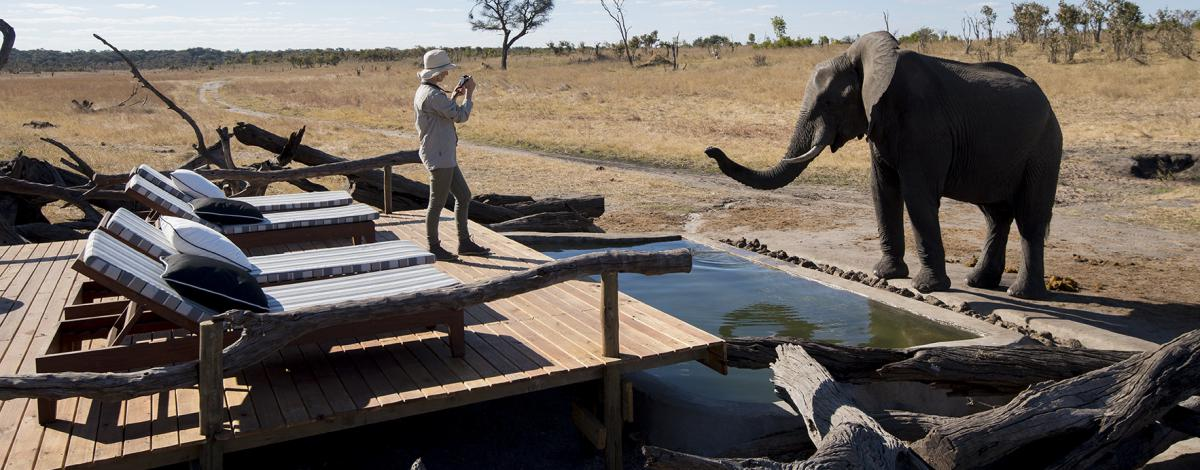 Voyage au Zimbabwe: Chutes Victoria & Safaris à Hwange et Mana Pools