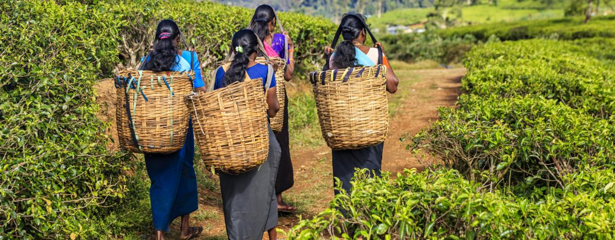 Charmes du Sri Lanka en dehors des sentiers battus