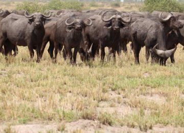 Safari au Botswana et au Zimbabwe en lodges de charme et Chutes Victoria