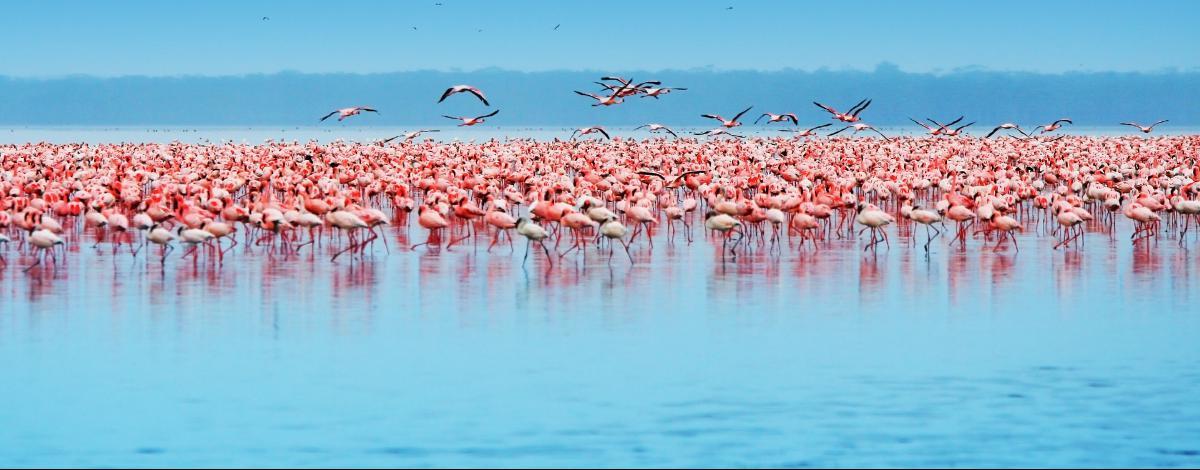 100% safari en petit groupe : Lac Nakuru, Masai Mara et Amboseli