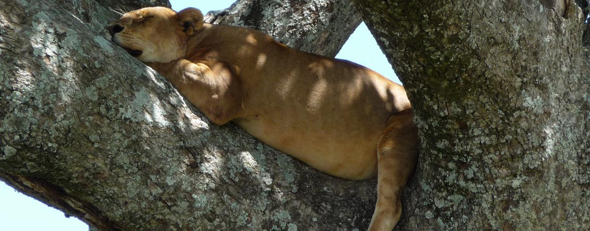 100% Safari en Tanzanie
