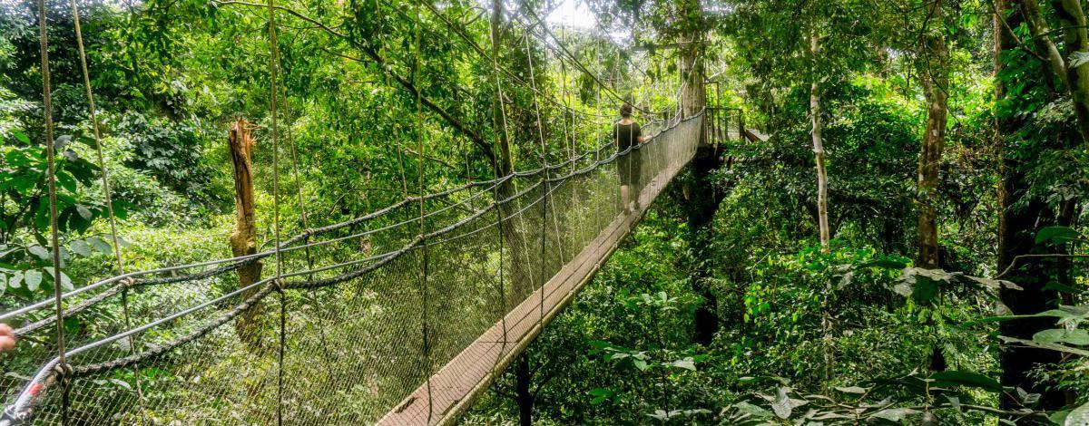 Mystérieuse Bornéo