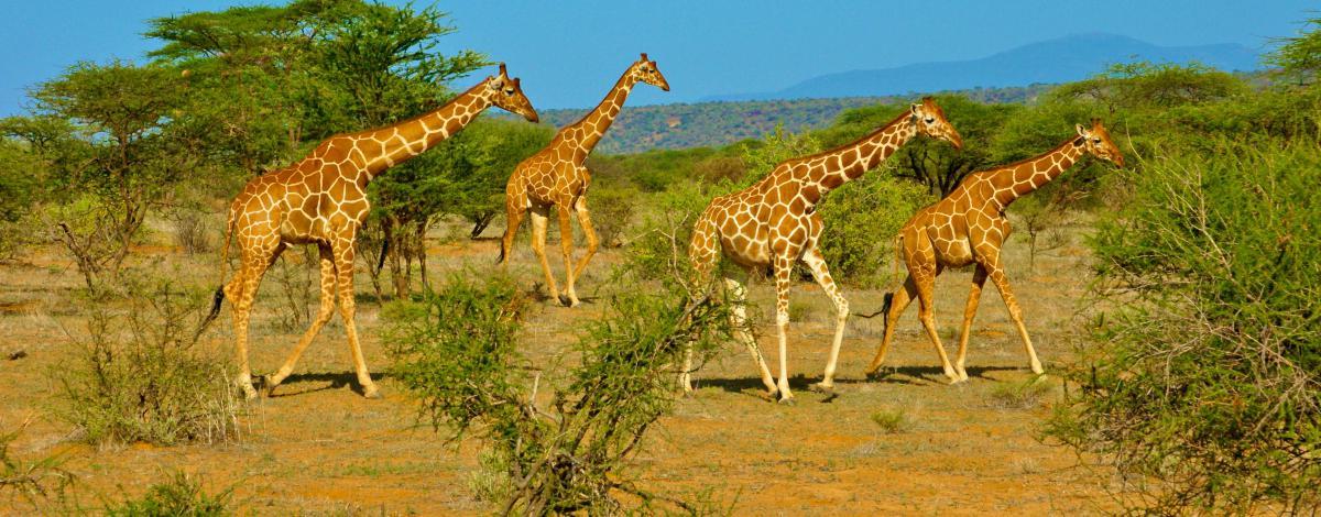 Safari en Tanzanie et plage à Zanzibar