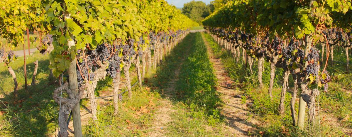 Bordeaux, ses vignobles et le Bassin d'Arcachon