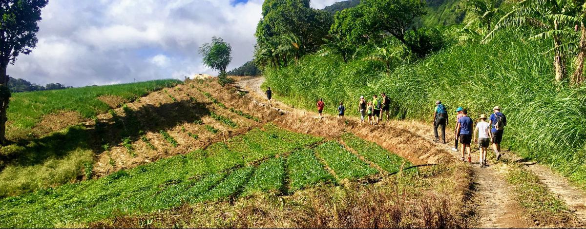 Une douce aventure en Martinique