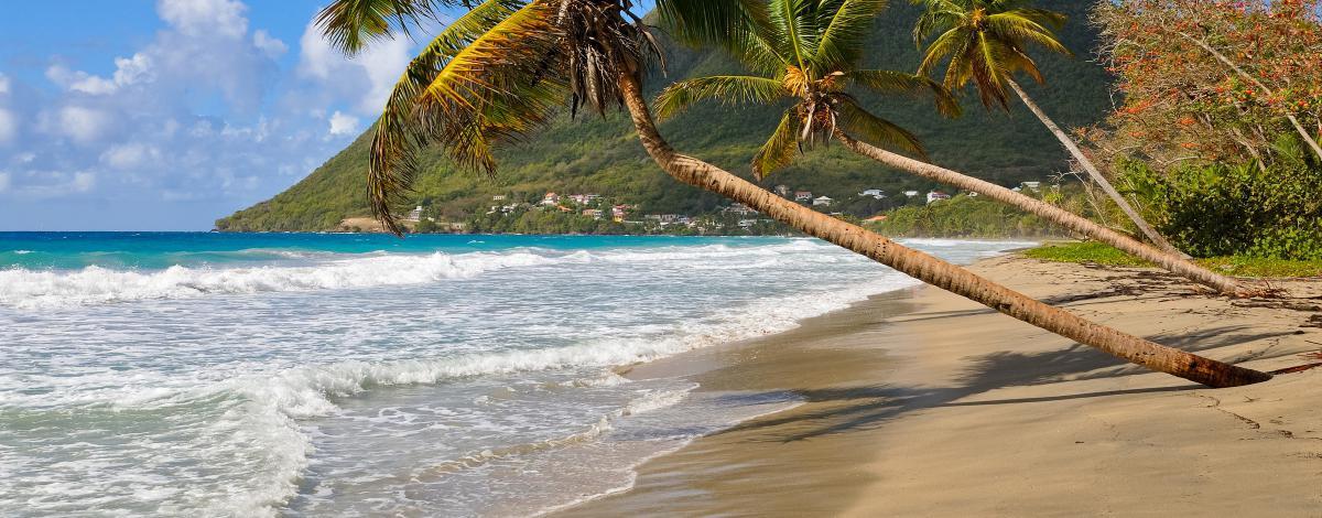 Sous le soleil de la Martinique