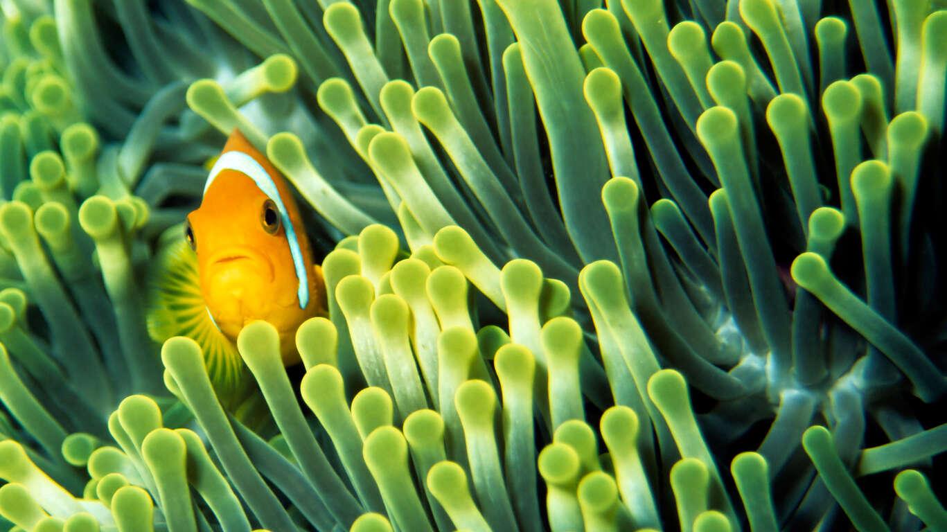 Croisière Plongée aux Seychelles