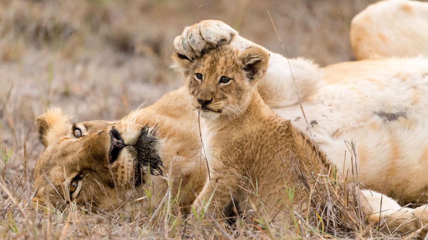 Voyage au Parc Kruger & Blyde River