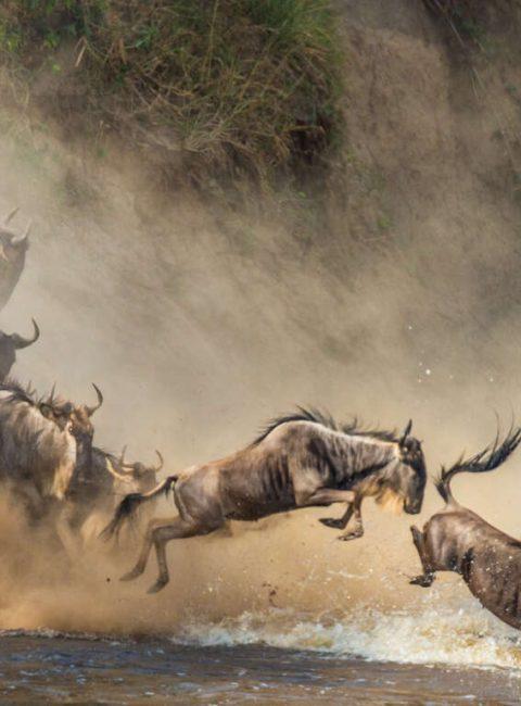 Serengeti, Ngorongoro, Kilimandjaro et le Nord de la Tanzanie