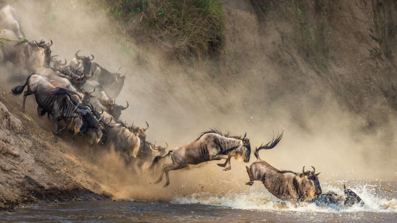 Voyage au Serengeti, Ngorongoro, Kilimandjaro et le Nord