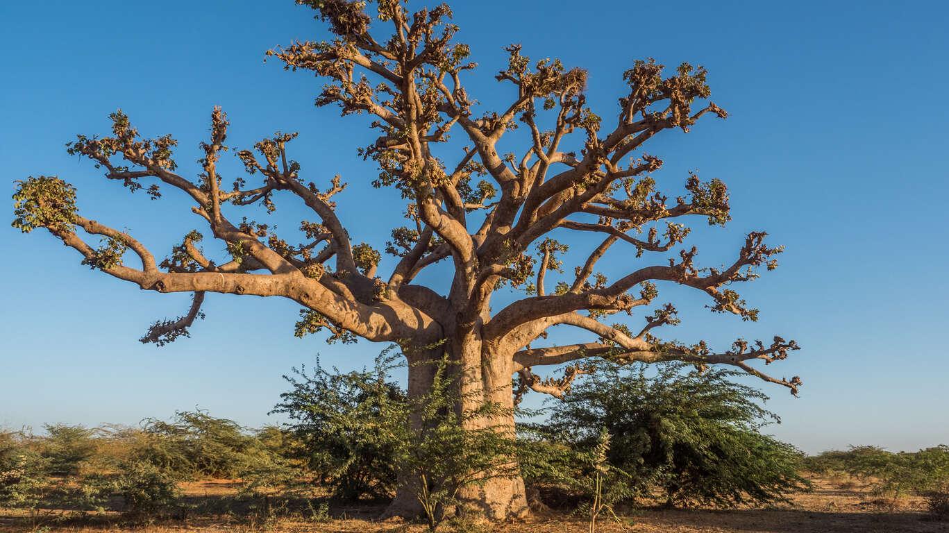 D'un baobab à l'autre en famille